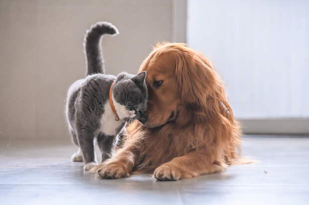 В пункте на Абрамцевской привьют домашних животных от бешенства
