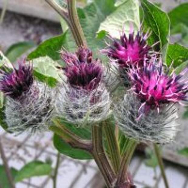 Необычный цветок словно покрыт паутиной