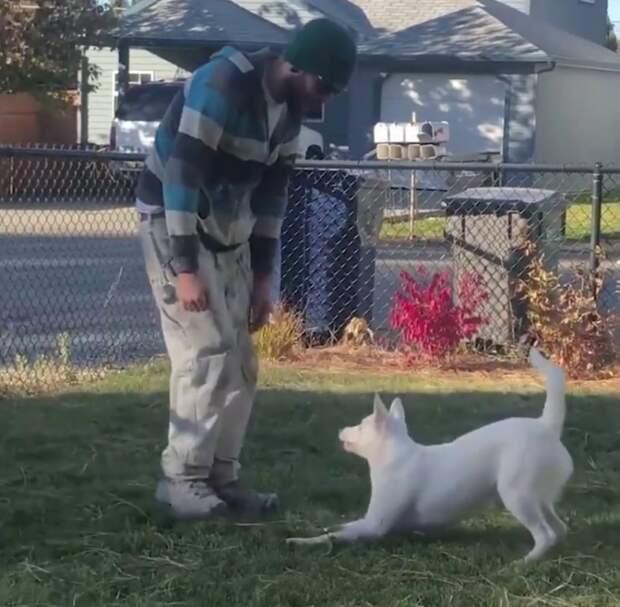 Слепой и глухой пес каждый день встречает хозяина с работы