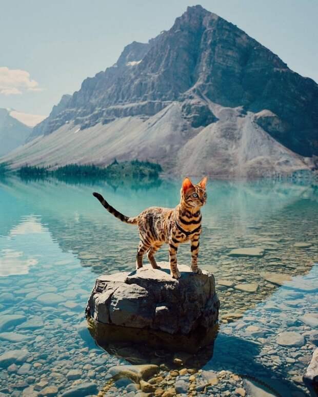 Звезда Instagram кот-путешественник по имени Суки