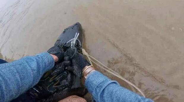 Рыбаки спасли тюленя, вокруг шеи которого была обвёрнута пластиковая верёвка