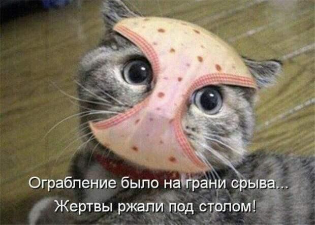 Милые и смешные кошки | Веселые собаки