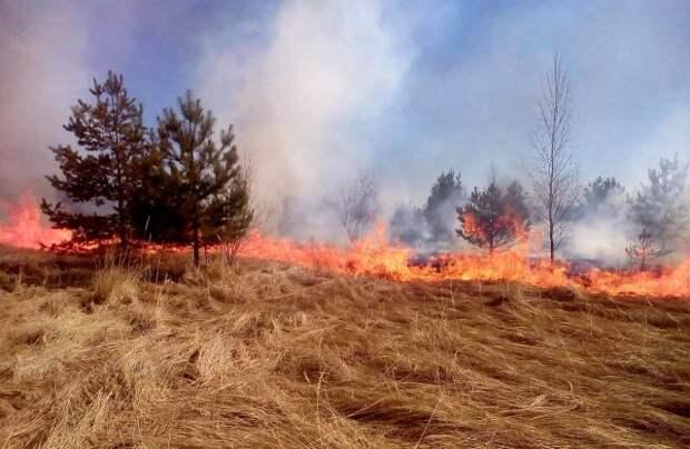 В МЧС рассказали, сколько домов сгорело в РФ из-за пала сухой травы весной