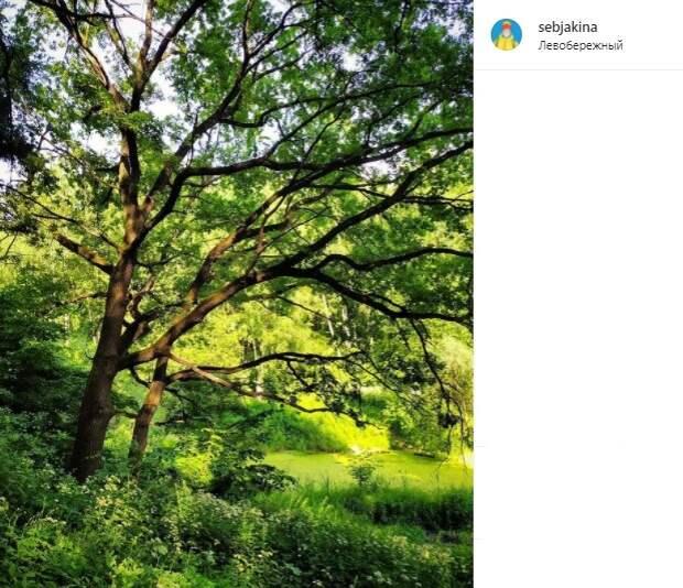 Фото дня: зелень парка в Левобережном