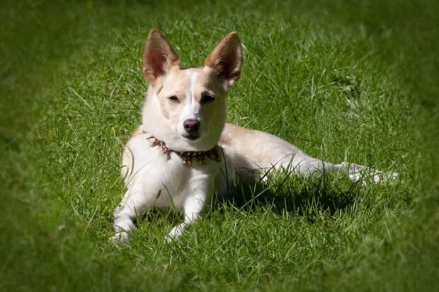 Кинологи из колледжа на Акдемика Скрябина открыли «курс хороших манер» для собак