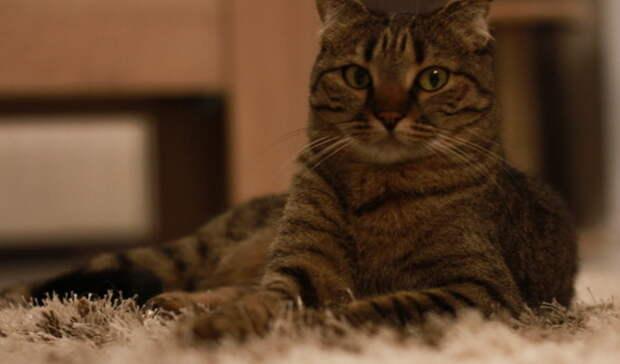 Покусились насвятое. ЖительКазахстана обманул омичку при продаже котят