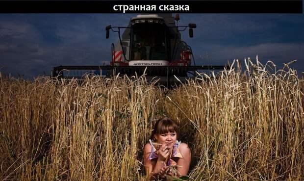 Россия в лидерах по экспорту зерна, а хлеб подорожал.