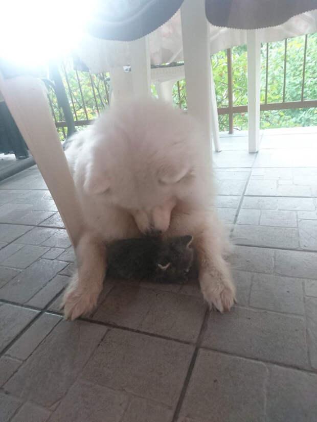 собака играет с котенком