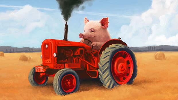 Интернет-герой поросенок Петр уезжает из России на тракторе