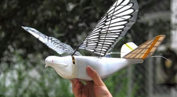 В Китае появились военные дроны, копирующие поведение голубей