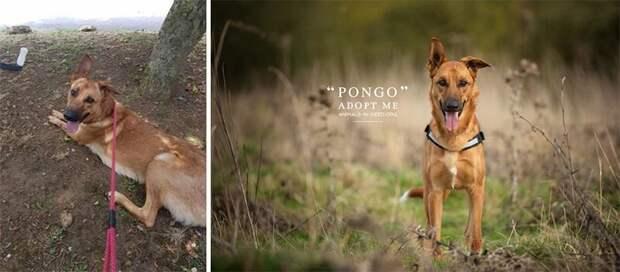 12. Понго животные, помощь, портрет, приют, собака, фотограф, хозяин