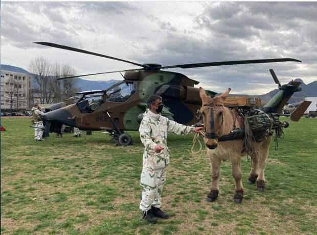 Мулы 27-й горно-пехотной бригады