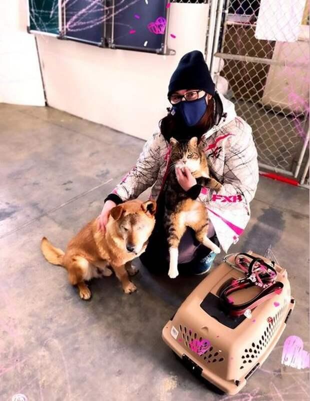 Слепая собака не могла обходиться без поводыря-кота и из приюта они уехали вместе
