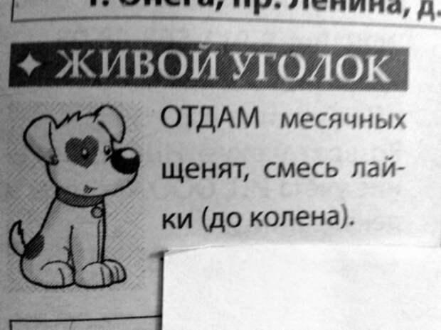 Новые породы собак на Novate.ru. | Фото: Fishki.net.