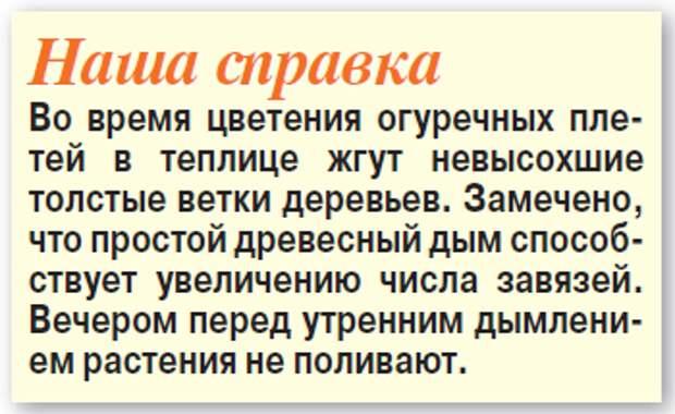 Макси-урожай мини-огурцов