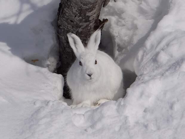 Зайцы удивили мир: ученые выяснили, что они едят животных