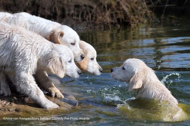 Финалисты Конкурса забавной фотографии животных 2020