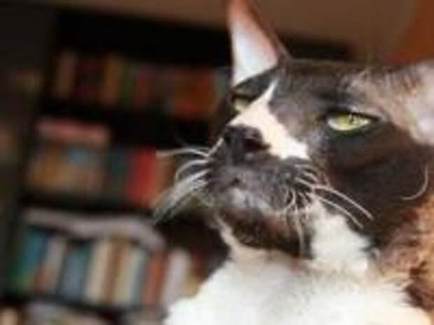 Как понять, кто вы вашей кошке - раб, друг или заботливый родитель