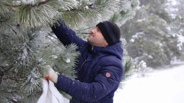 Площадь лесов вРостовской области вырастет на1,6тыс гектаров