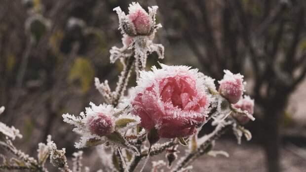 Заморозки опять вернутся вРостовскую область