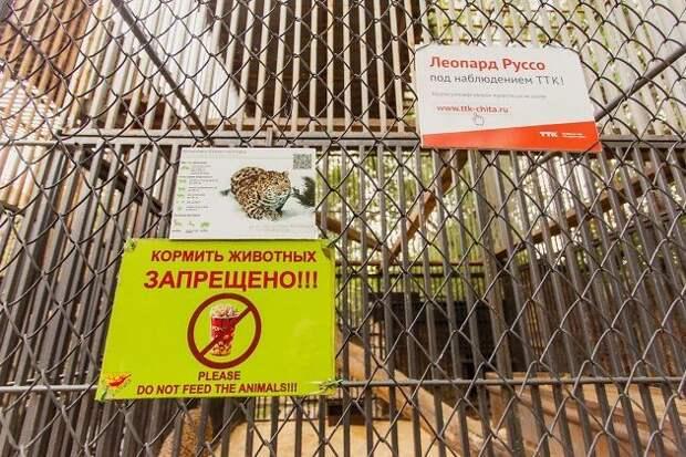 Ребёнок, укушенный соболем в зоопарке Читы, тыкал палкой в клетку