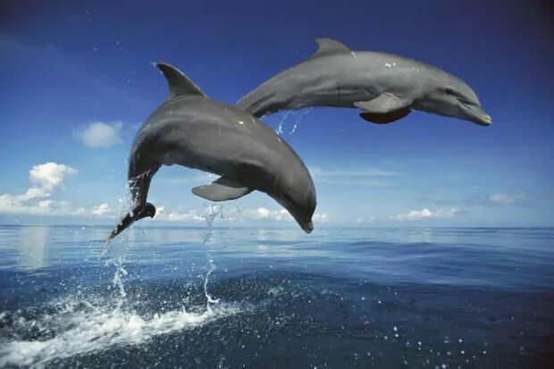 Самец и самка дельфина: основные отличия