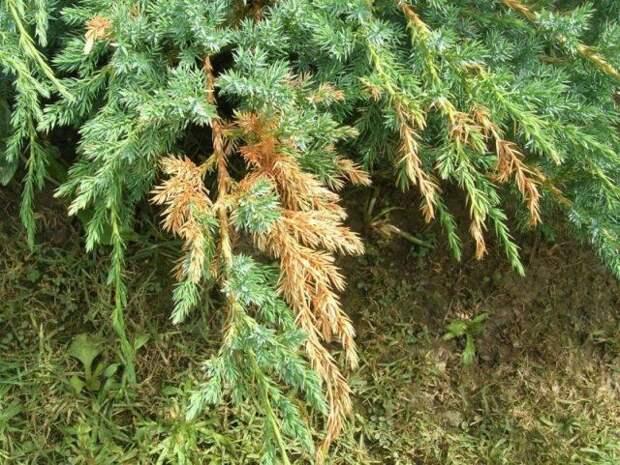 Опасное светило: солнечные ожоги коры деревьев и других растений