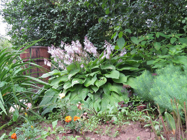 Выбираю растения для романтичных полисадников