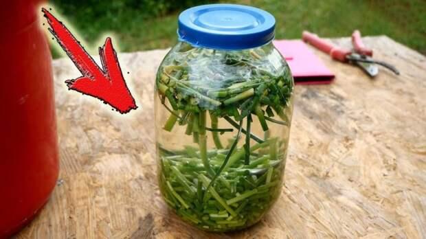 Как приготовить натуральный инсектицид и фунгицид