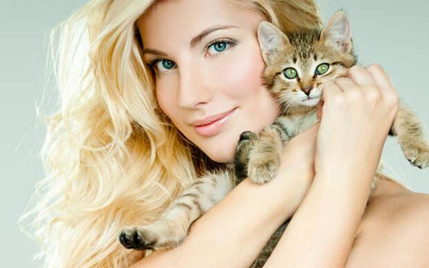 Фотографии животное котят коты Блондинка Лицо красивая 3840x2400