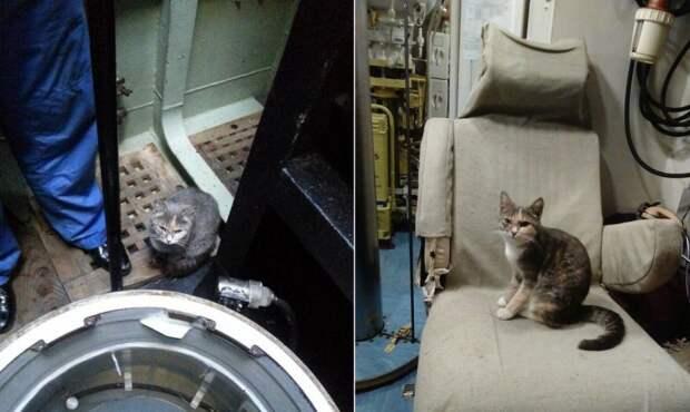 Кошка родила шестерых котят на подводной лодке в Новороссийске