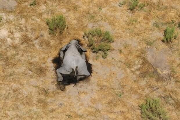 Катастрофа вБотсване: понепонятной причине там погибли более 350 слонов