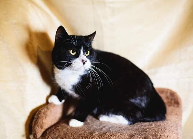 Совершенно домашний кот ищет дом!