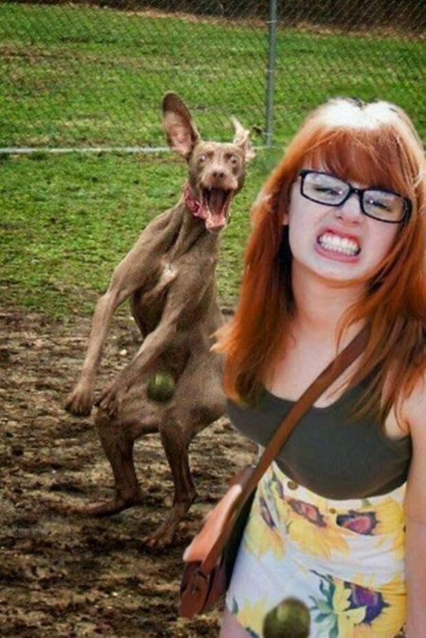 3. Непонятно, это девушка дразнит собаку или наоборот