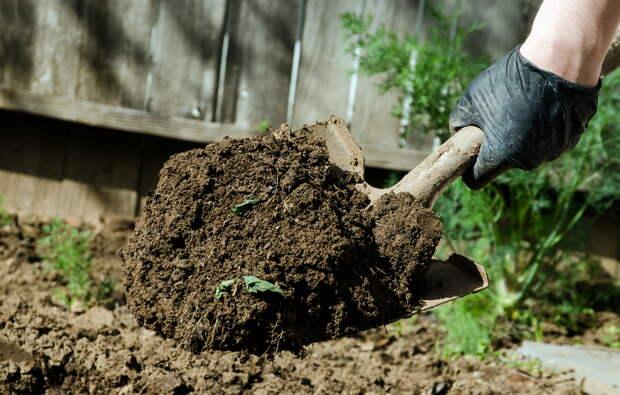 Вредно ли копать грядки для почвы осенью?