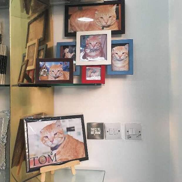 фотографии кота