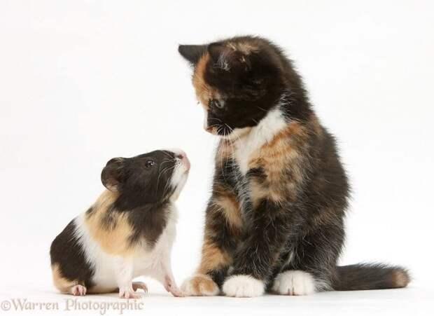 Симпатичные совпадения Похожие пары, животные, совпадения