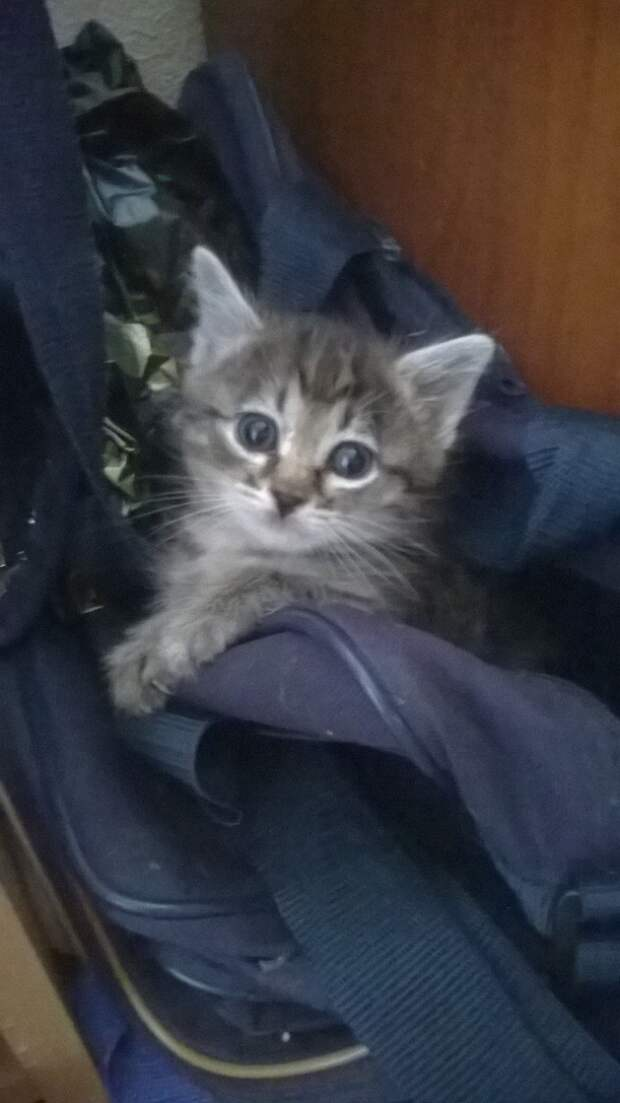 Спасли из подвала самого маленького и слабенького котика