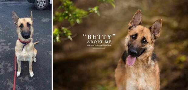 2. Бетти животные, помощь, портрет, приют, собака, фотограф, хозяин