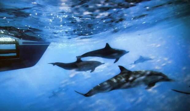 Люди отрицательно повлияли на звуки океана под водой