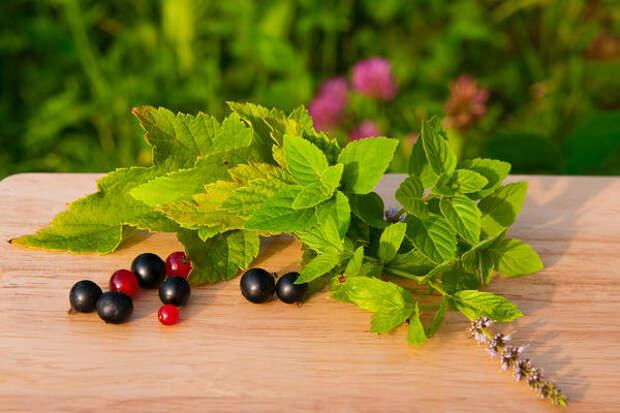 В привычных нам растениях содержится много полезных веществ