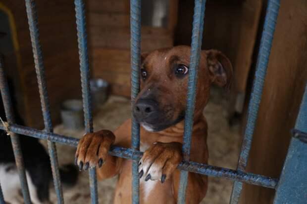 Собака / Фото: Звездный бульвар