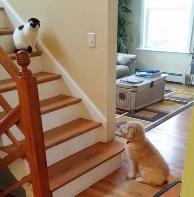 собака и кот в одной комнате