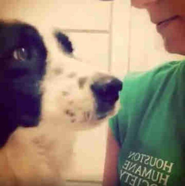Вы когда-нибудь видели, как выглядит разбитое сердце собаки?
