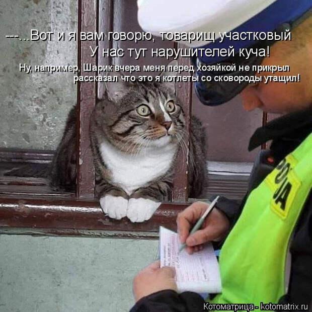 Свежая котоматрица для отличного настроения