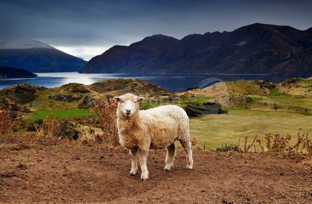 Интересные факты с картинками новой зеландии