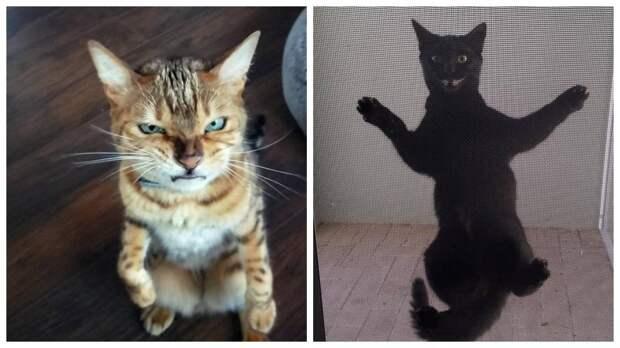 13 эмоциональных котов с очень выразительными мордами