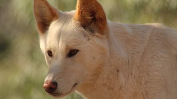 Археологи обнаружили в Грузии окаменелость охотничьей собаки возрастом 1,8 млн лет