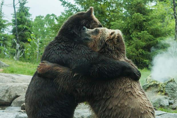 Любвеобильные медведи оставили россиян без гейзеров