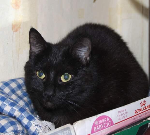 Кошь декоративная, загадочная, как все чёрные кошки, грациозная и жизнерадостная))